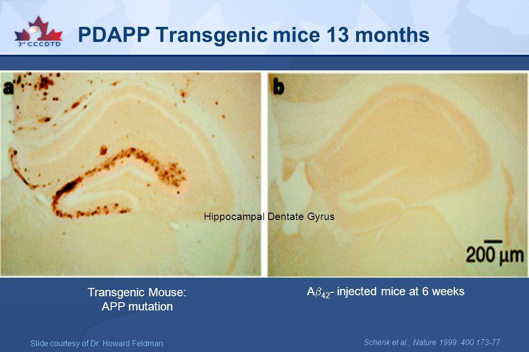 PDAPP Transgenic mice 13 months