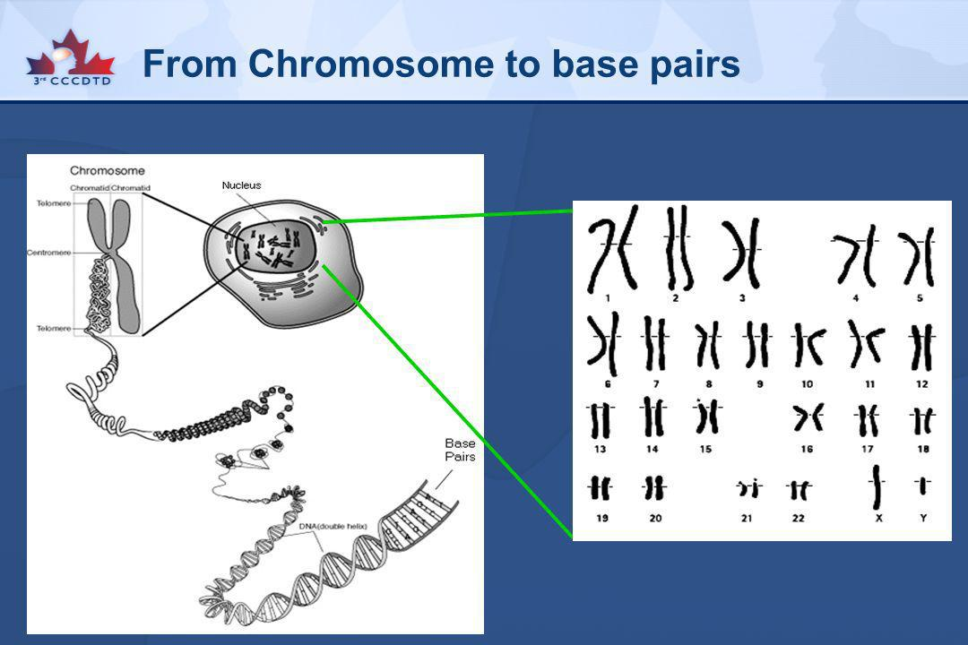 From Chromosome to base pairs