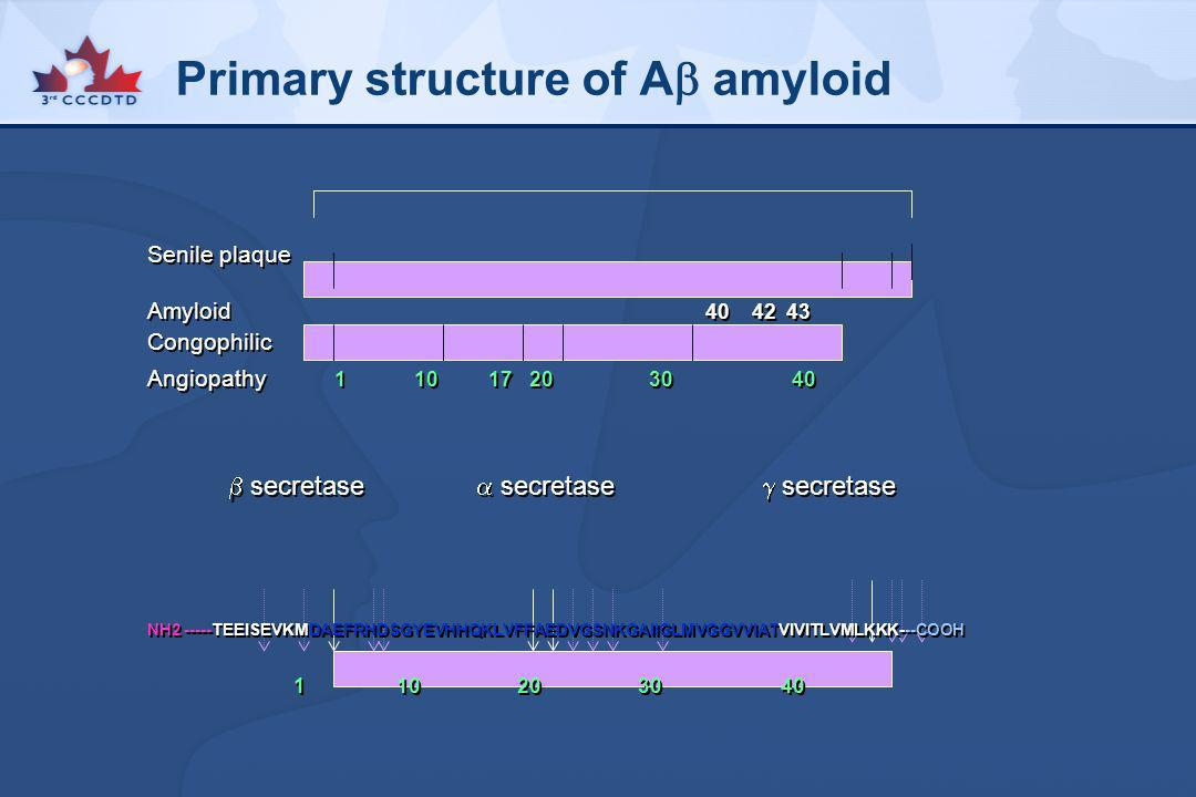 Primary structure of A amyloid