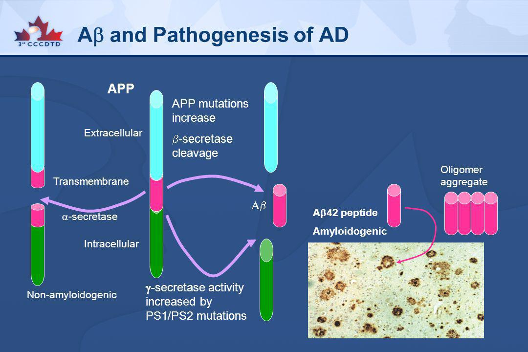 A and Pathogenesis of AD