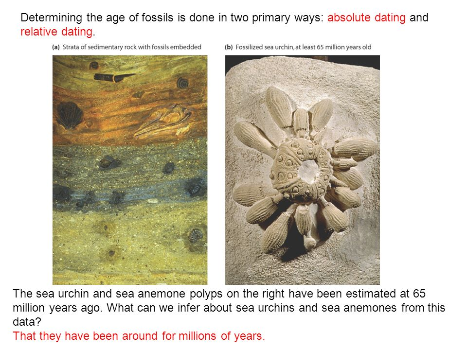 What is a type of relative hookup of fossils