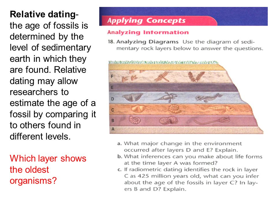 Dating the fossil record lab answer key
