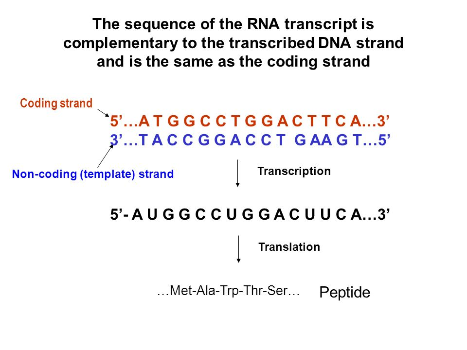 Dna repair types direct repair excision repair for What is a template strand