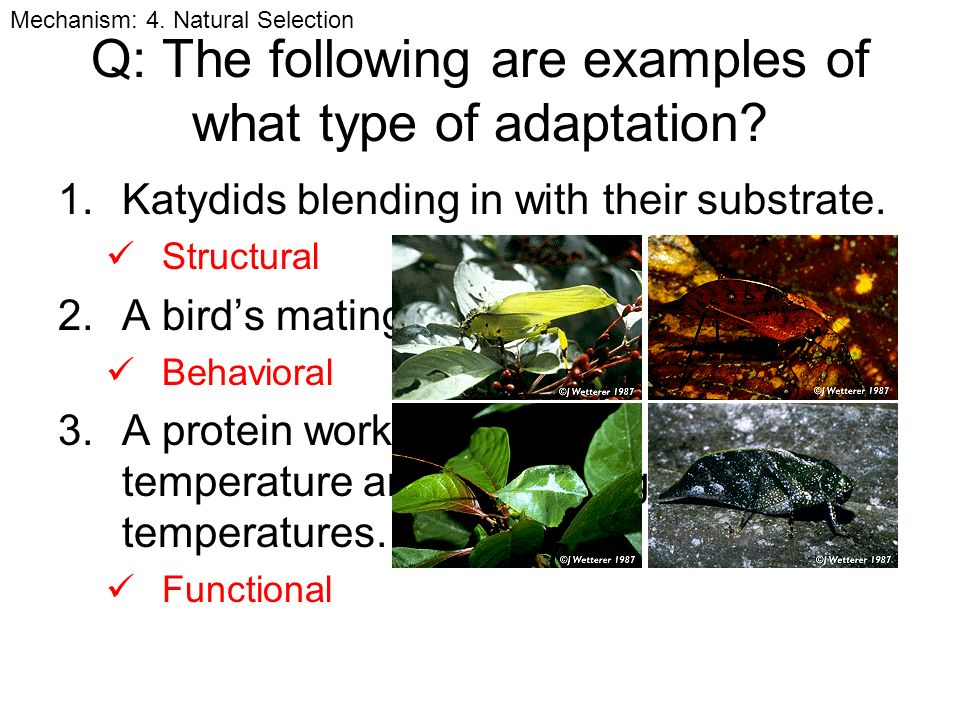 The Theory Of Evolution Ppt Video Online Download - 23 examples natural selection work