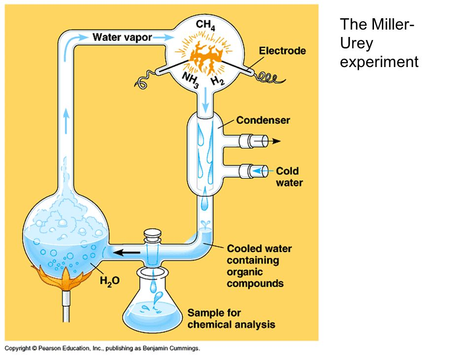 the amino acid experiments of stanley miller in 1953 Using paper chromatography, miller identified five amino acids present in the   the 1953 stanley l miller experiment: fifty years of prebiotic organic.