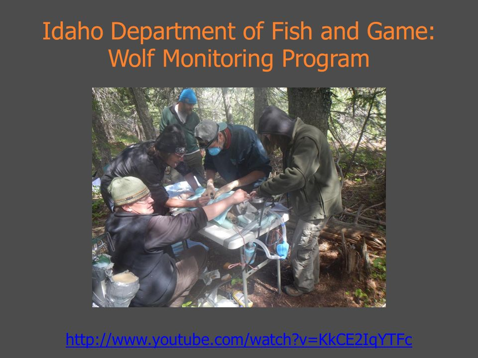 Presented by lauren n watine ppt video online download for Department of fish and game