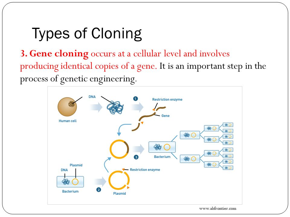 important advance from gene cloning The cloning of humans is on most of the lists of things to worry about from science, along with behaviour control, genetic engineering, transplanted heads, computer poetry and the unrestrained growth of plastic flowers.