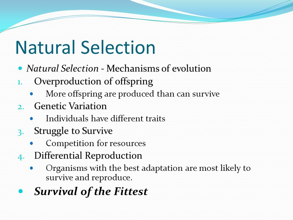 Natural Selection And Survival Of The Fittest Related