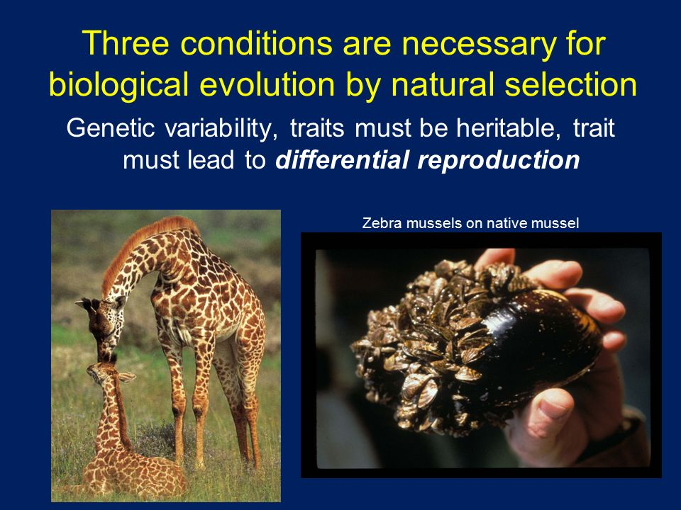 Conditions Necessary For Evolution By Natural Selection
