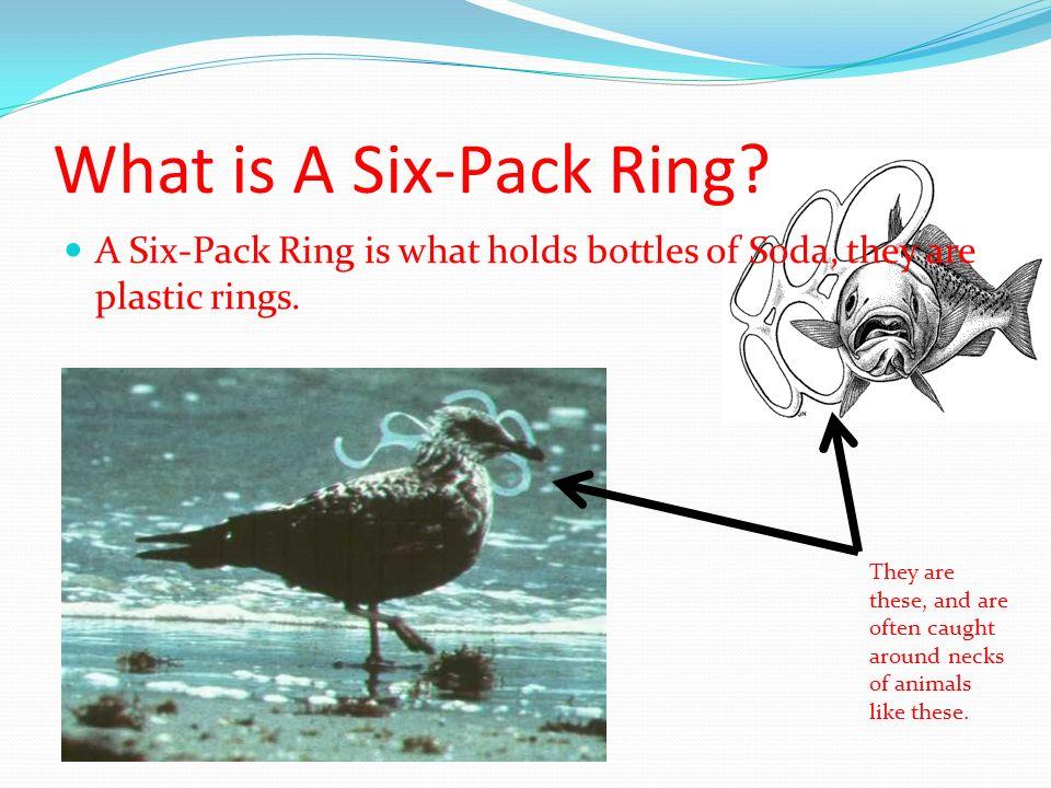 Six Pack Ring Around Sea Animals