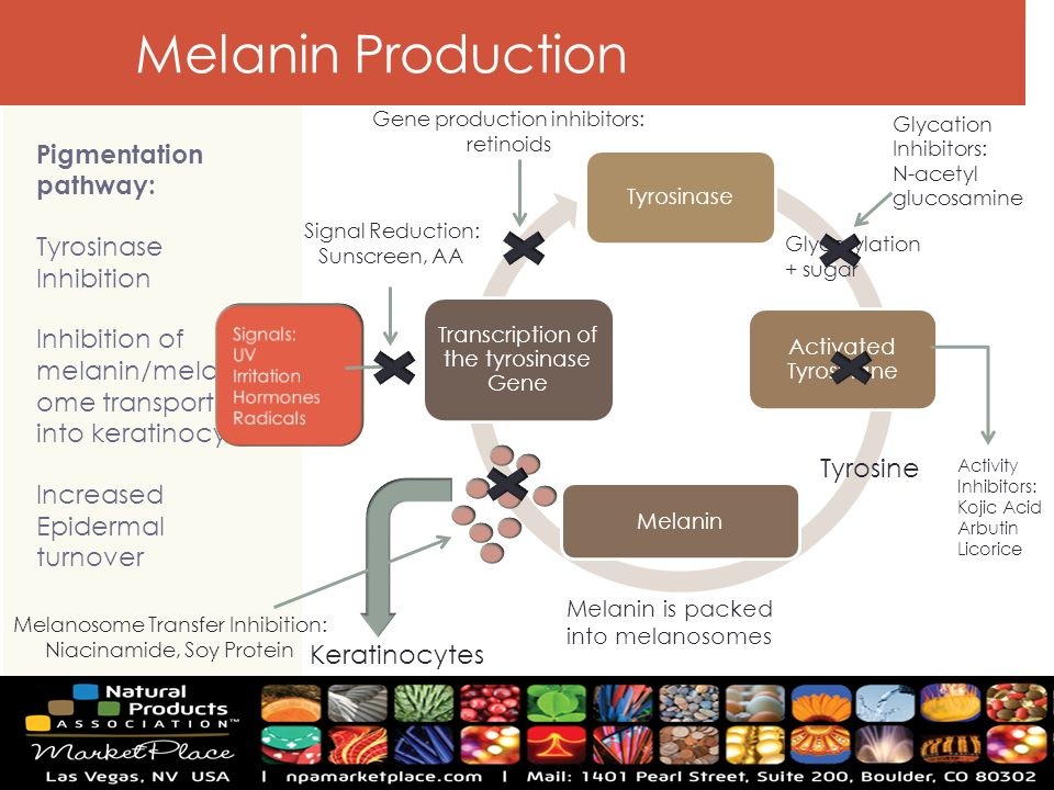 protein production pathway pictures to pin on pinterest