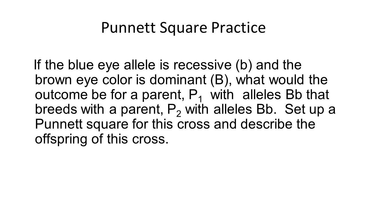 how to make a punnett square for eye color
