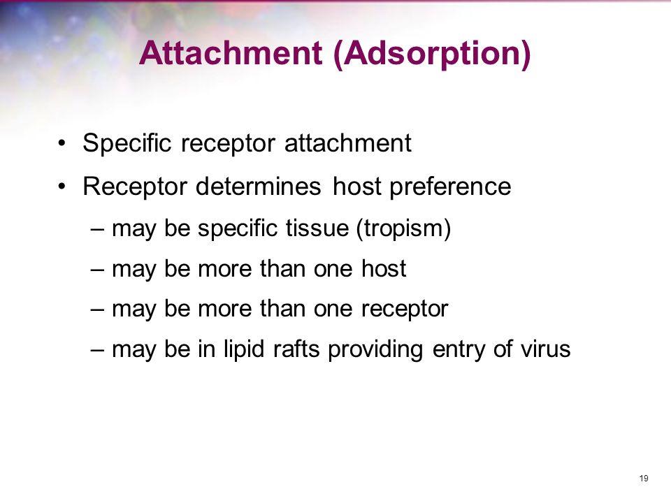 Attachment (Adsorption)