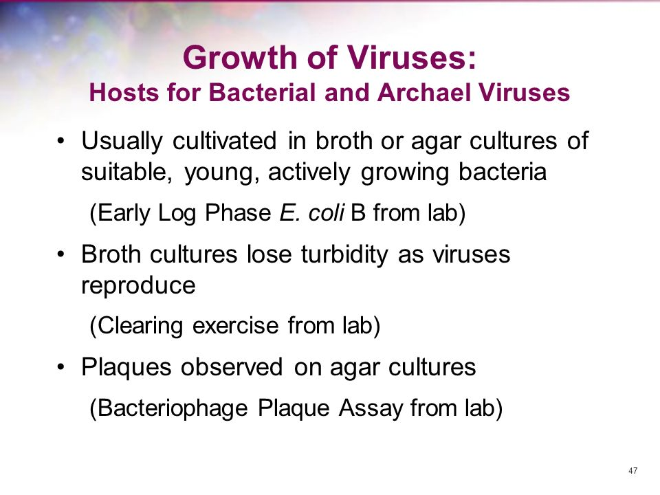 Growth of Viruses: Hosts for Bacterial and Archael Viruses