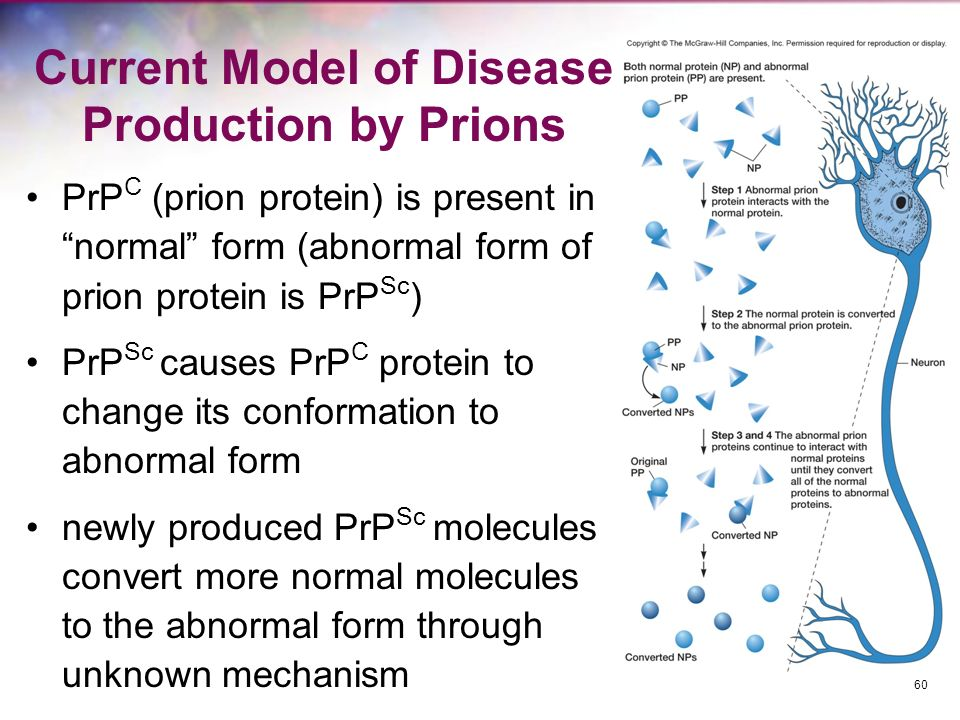 Current Model of Disease Production by Prions