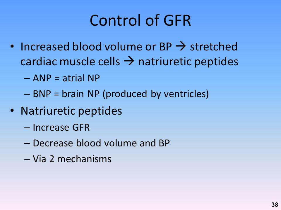 Control of GFR Increased blood volume or BP  stretched cardiac muscle cells  natriuretic peptides.