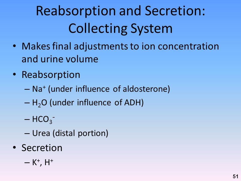 Reabsorption and Secretion: Collecting System