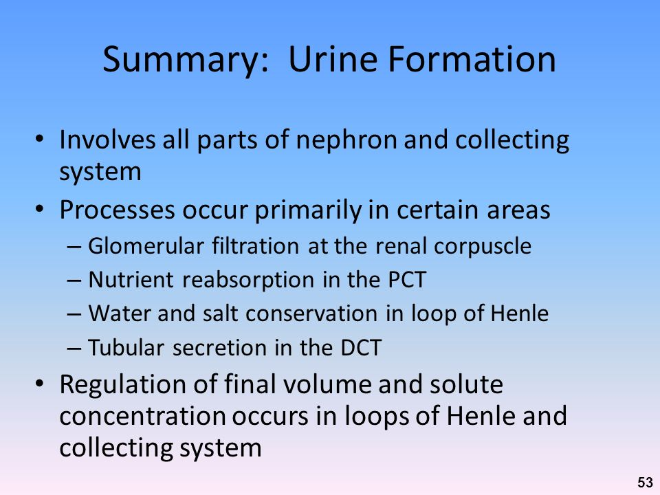 Summary: Urine Formation