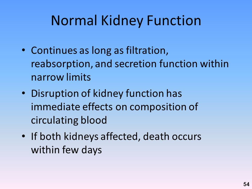 Normal Kidney Function