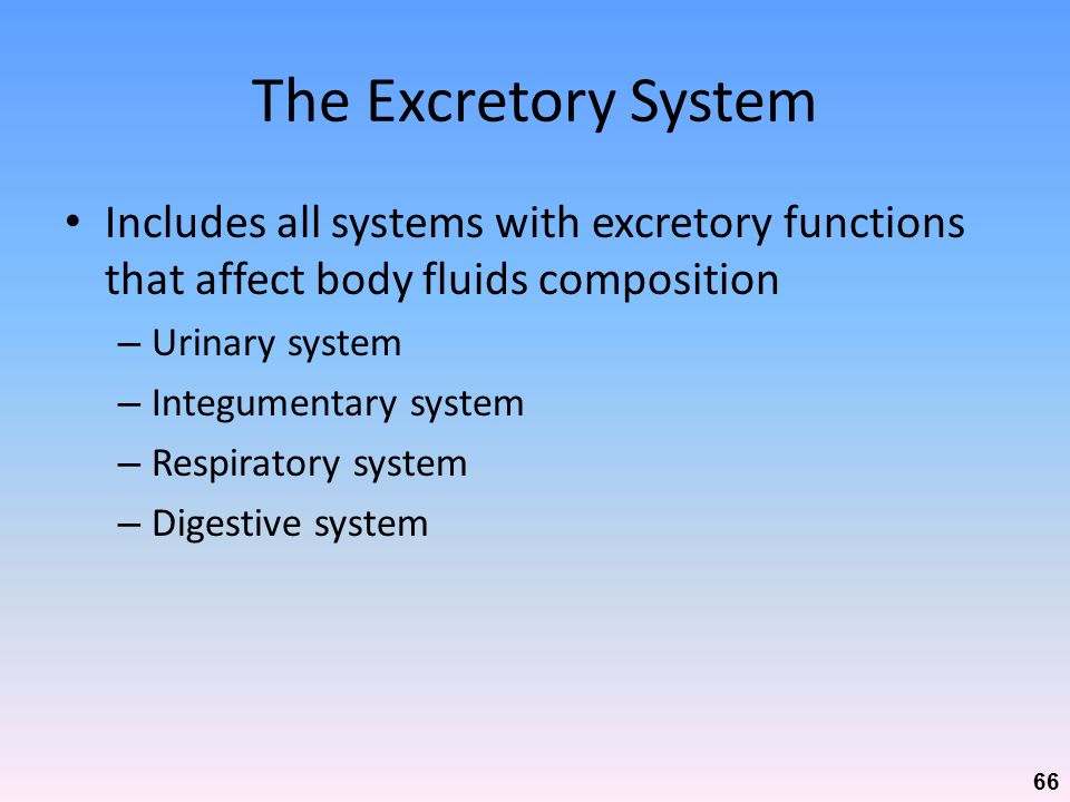 The Excretory System Includes all systems with excretory functions that affect body fluids composition.
