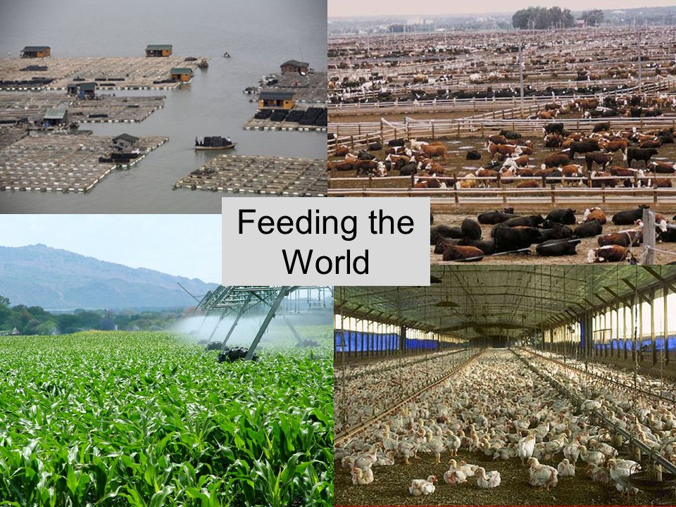 Food Resources Feeding the World