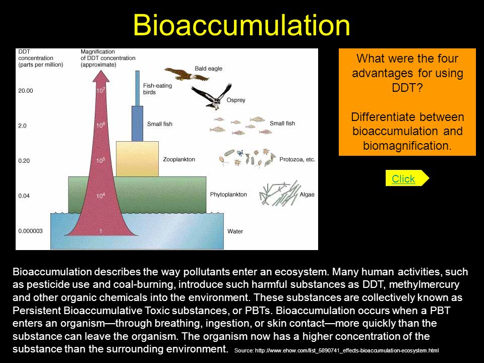 Bioaccumulation What were the four advantages for using DDT