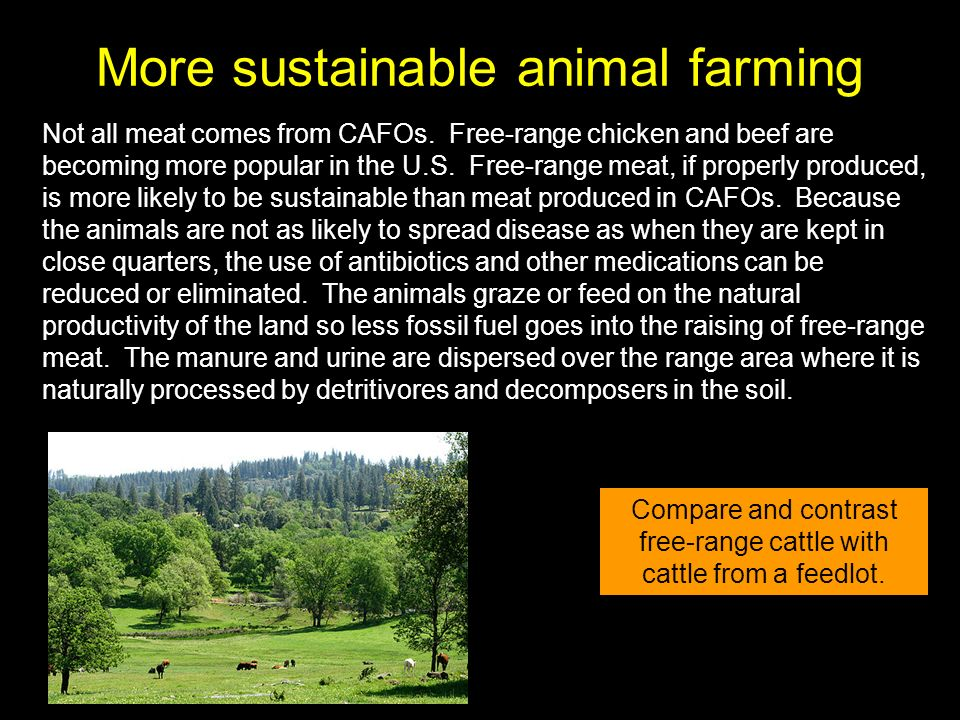 More sustainable animal farming