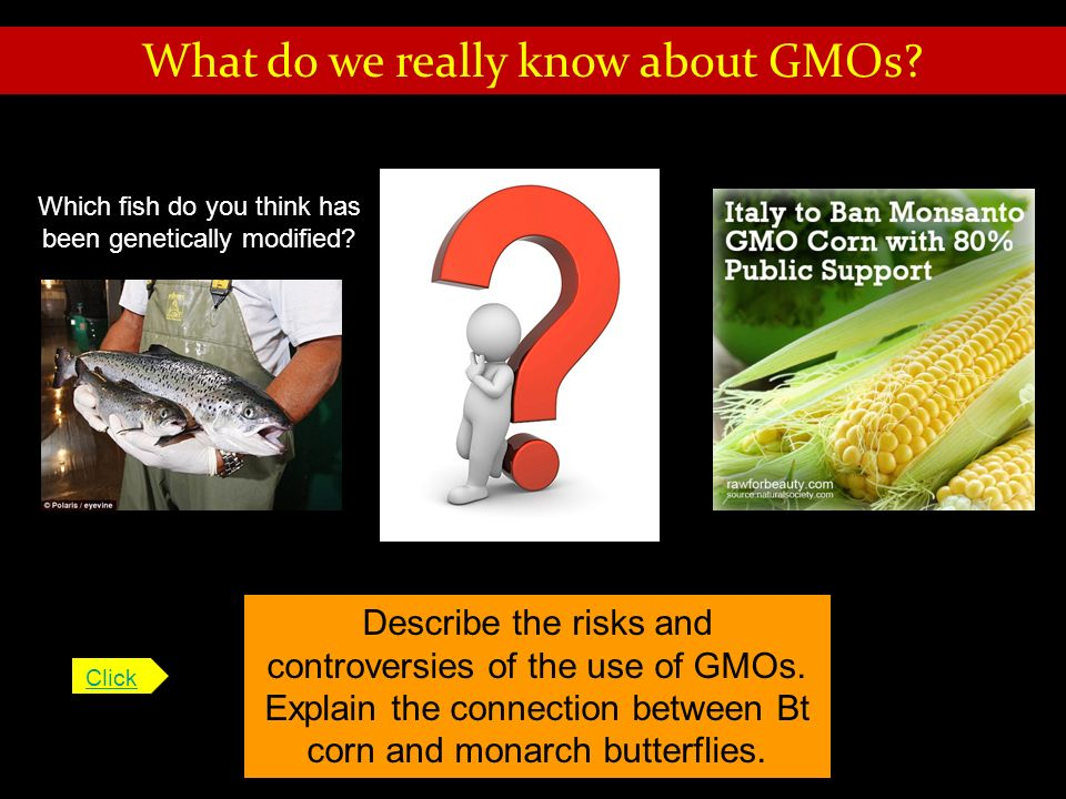 What do we really know about GMOs