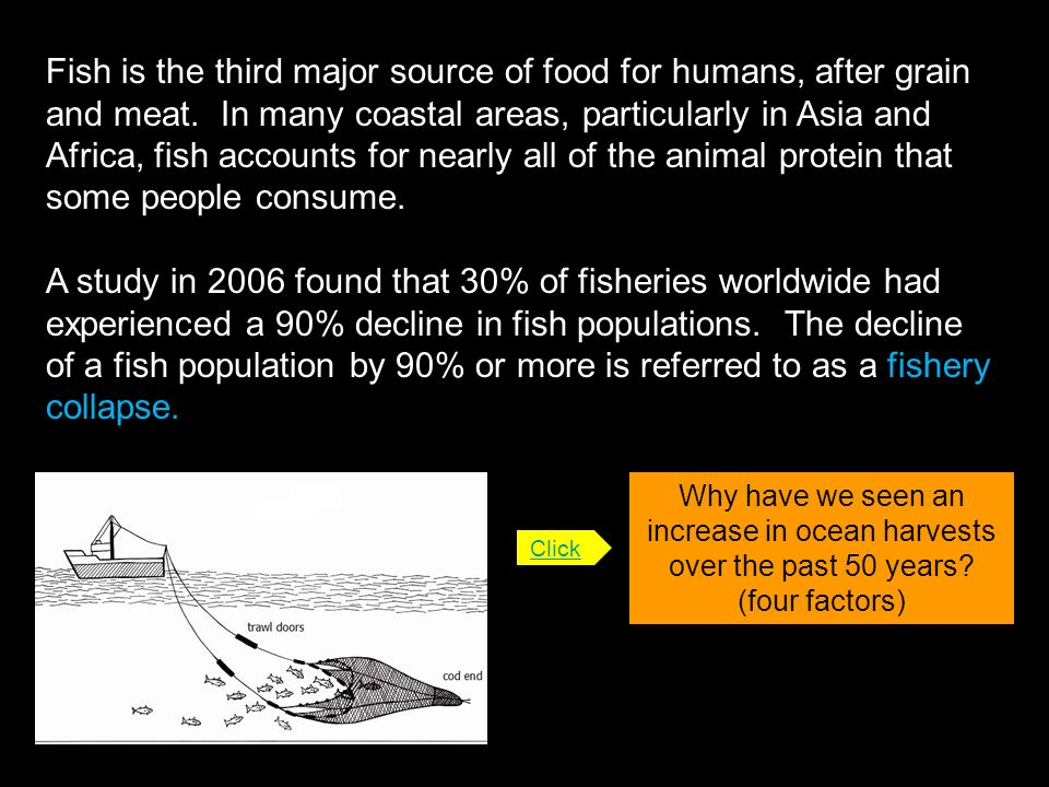 Fish is the third major source of food for humans, after grain and meat. In many coastal areas, particularly in Asia and Africa, fish accounts for nearly all of the animal protein that some people consume.
