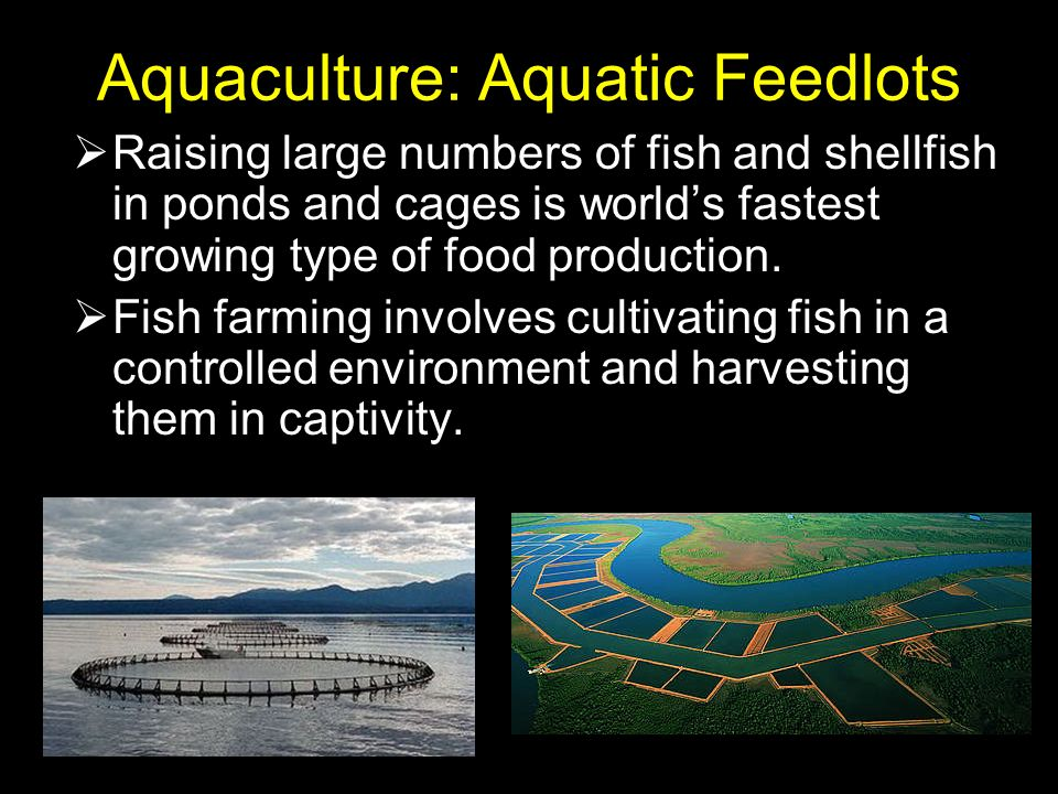 Aquaculture: Aquatic Feedlots