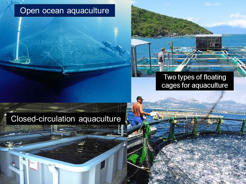 Open ocean aquaculture