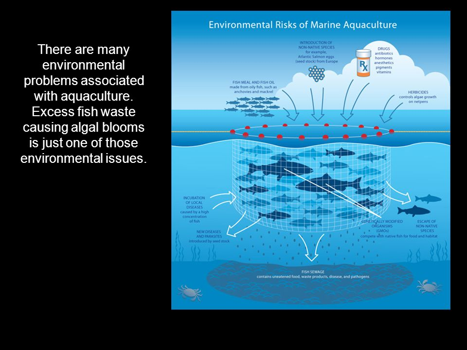 There are many environmental problems associated with aquaculture