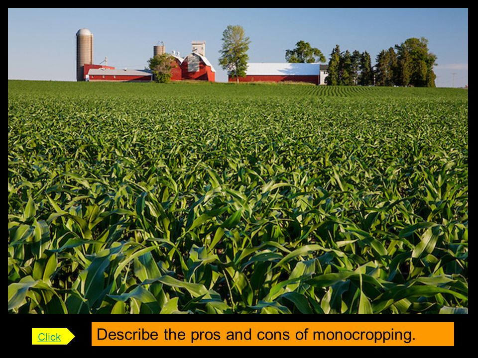 Describe the pros and cons of monocropping.