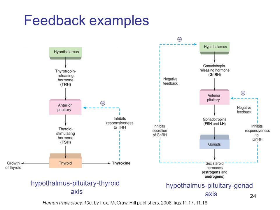 Hypothalamic Pituitary Thyroid Axis Negative Feedback Mechanism Wiring Diagrams