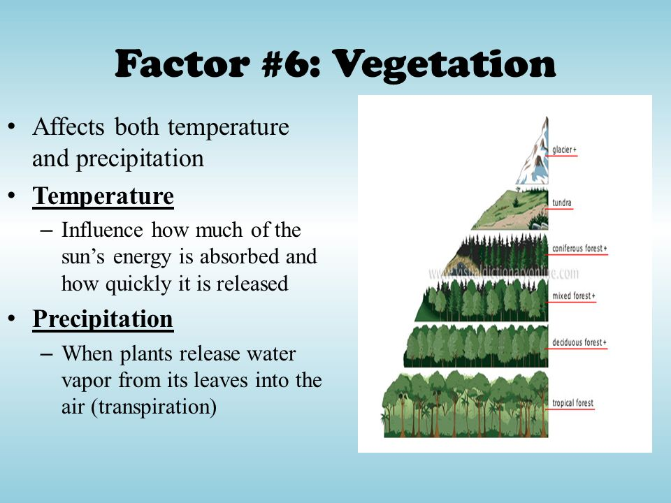 Factor #6: Vegetation Affects both temperature and precipitation