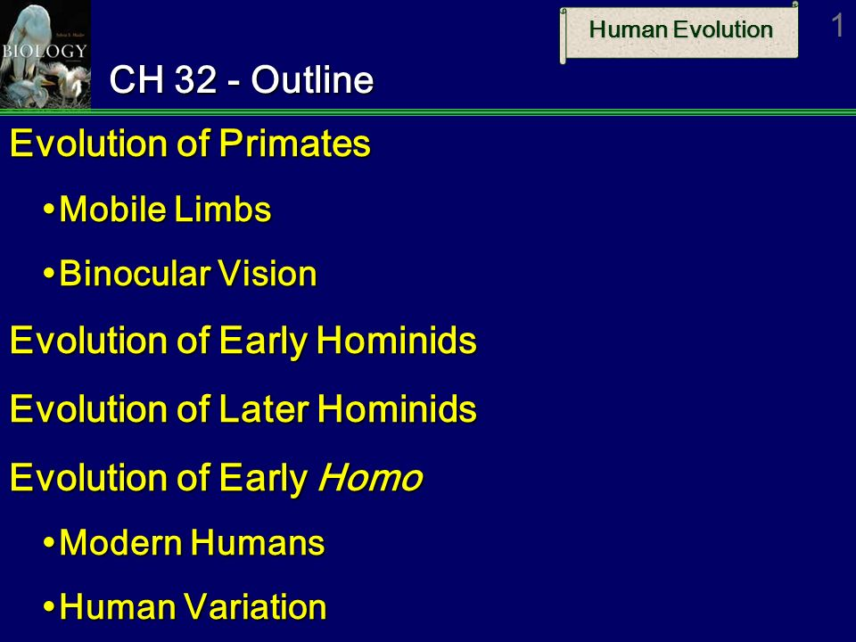 the evolution and variations of primate diet Most nonhuman primates have a mixed diet that consists of a wide spectrum of plant foods and a relatively small spectrum of animal foods patterns of food selection shift in relation to seasonal changes in food availability.