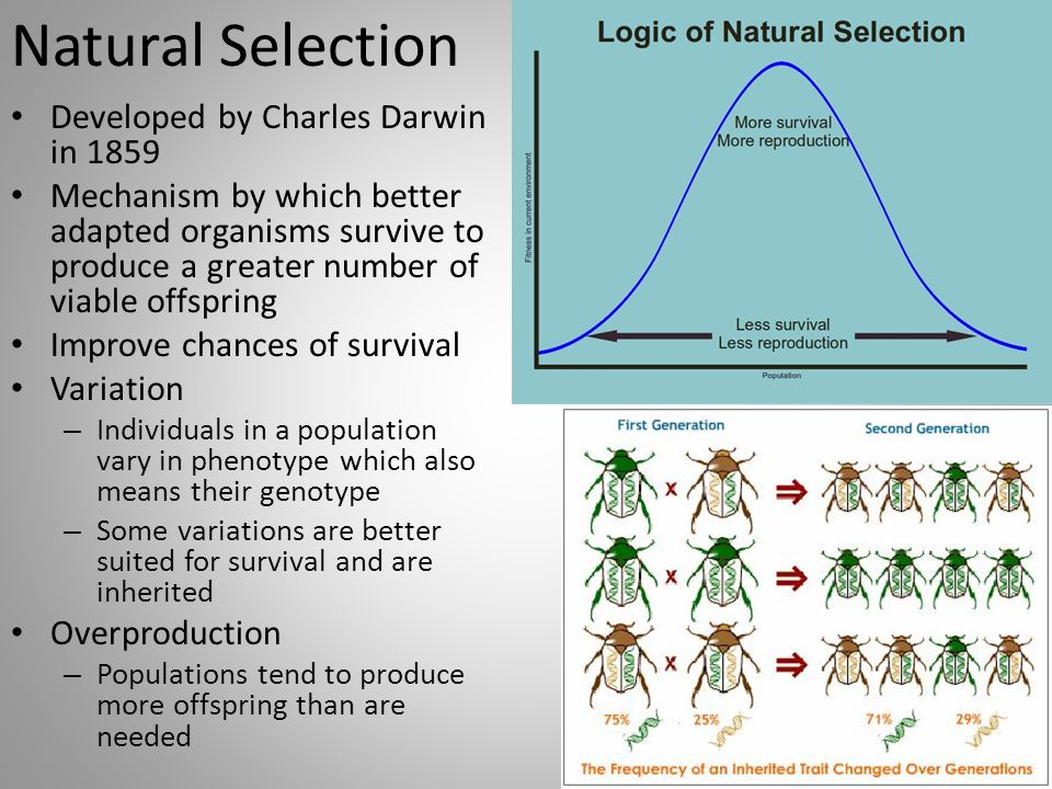 natural selection and phenotypic variation essay