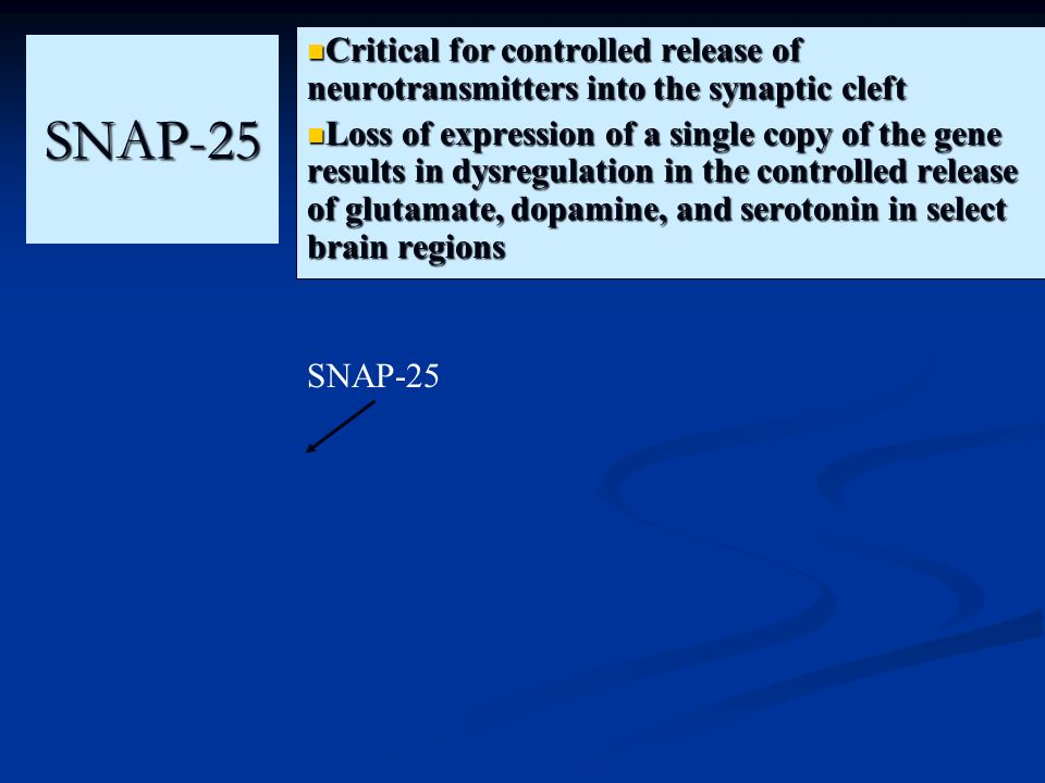 Critical for controlled release of neurotransmitters into the synaptic cleft