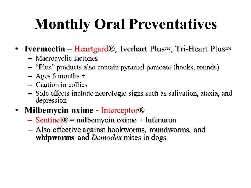 Oral Flea Preventatives For Cats