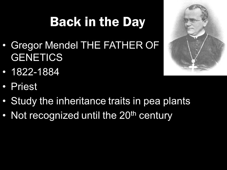 gregor mendel and the study of genes The founder of modern genetics, gregor mendel, may have falsified data in his famous pea experiment in order to better correspond with his expectations.