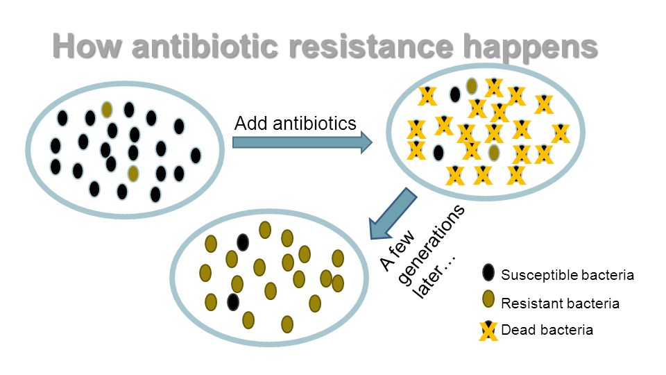 definition for antibiotic resistant bacteria Antibiotic resistance, n the ability of certain strains of microorganisms to develop resistance to antibiotics a group of antibiotics which have a tetracycline ring structure substituted with the sugar daunosamine see antineoplastic one that kills bacteria one that suppresses the growth of bacteria.