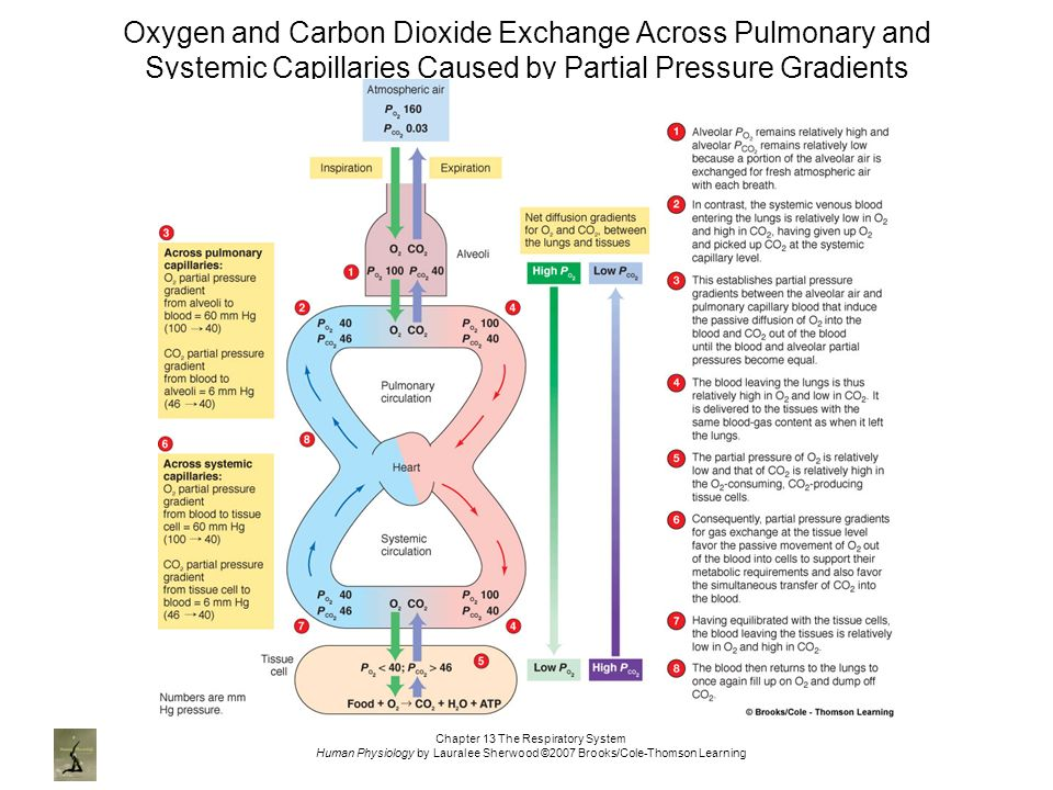 oxygen and carbon dioxide Carbon dioxide (chemical formula co 2) is a colorless gas with a density about 60% higher than that of dry air carbon dioxide consists of a carbon atom covalently double bonded to two oxygen atoms.