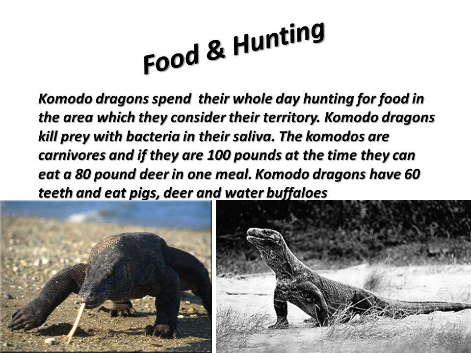 Food & Hunting