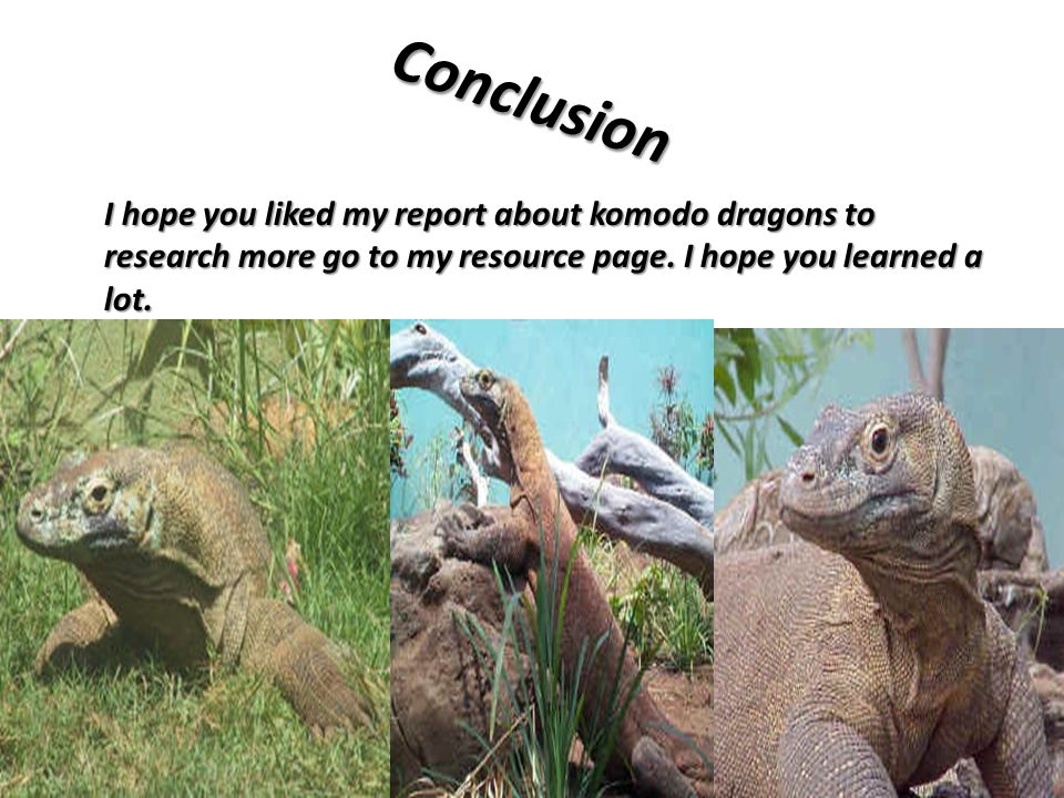 Conclusion I hope you liked my report about komodo dragons to research more go to my resource page.