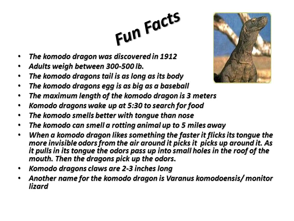 Fun Facts The komodo dragon was discovered in 1912