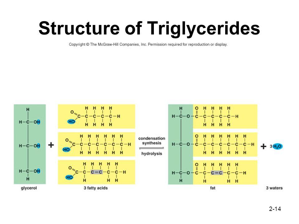 Organic Macromolecules Ppt Video Online Download