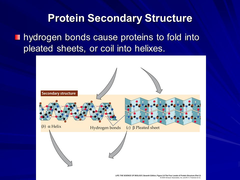 protein and hydrogen bonds Protein structures: primary, secondary, tertiary  peptide bonds to make a protein  of the polypeptide backbone and is stabilized by hydrogen bonds between n.