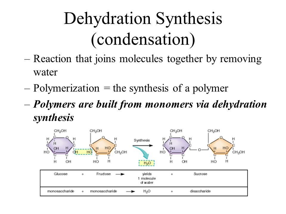 Dehydration Synthesis Example Unit 1: Cellular Energ...