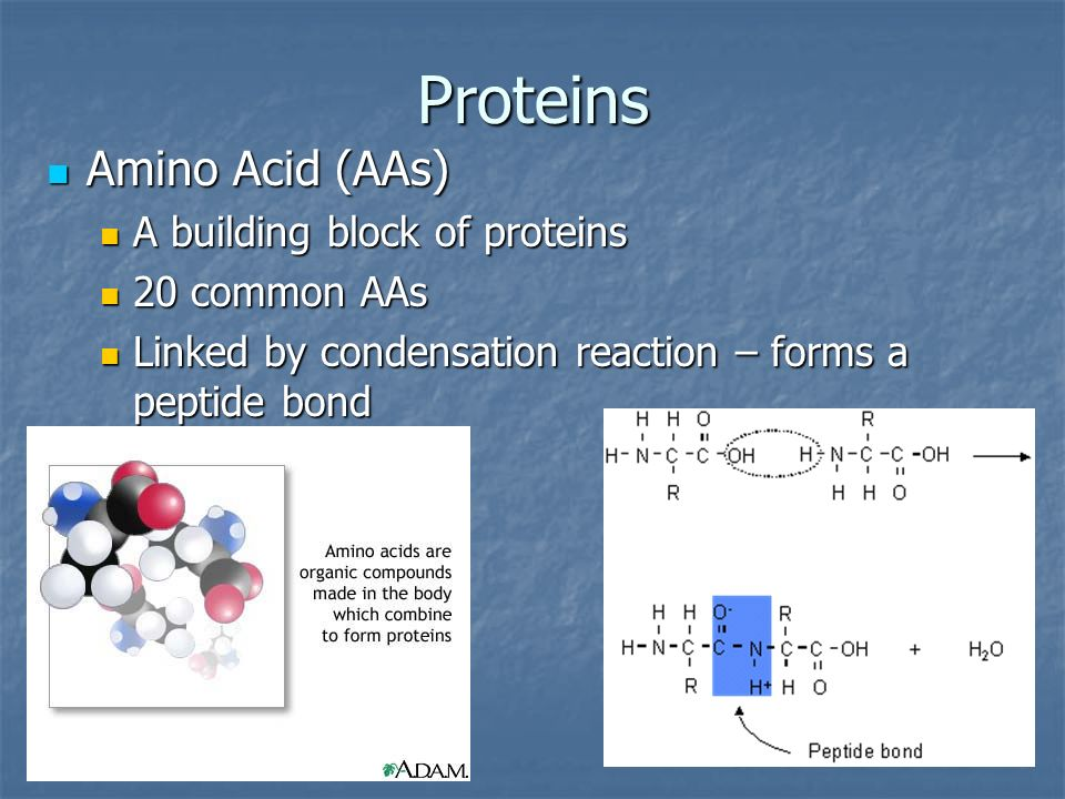 Proteins Amino Acid (AAs) A building block of proteins 20 common AAs