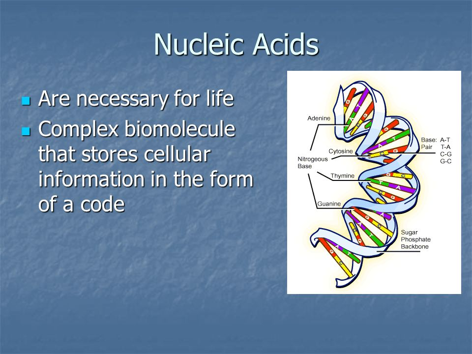 Nucleic Acids Are necessary for life
